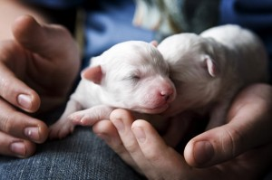 puppies_7292rs