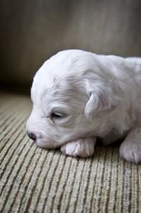 puppy_7497