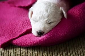 puppy_7500