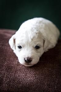 puppy_75061