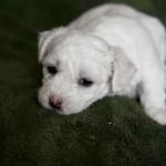 puppy-1_01211