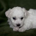 puppy-3_01281
