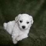 puppy-5_01371