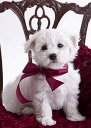 puppy_1974